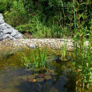 Teich mit Sitzplatz